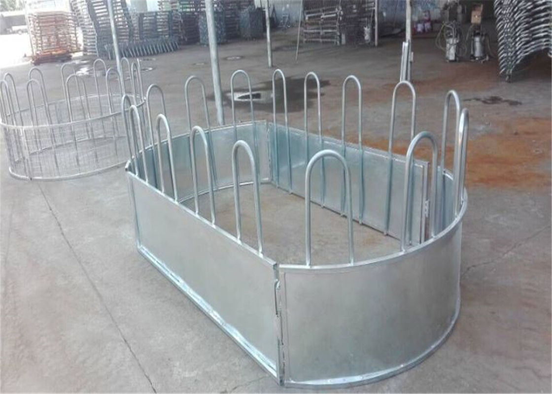 Australia standard galvanized cattle panel fence Cattle Crush,Cattle Chute supplier