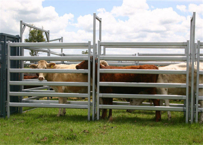 Australia Standard 2.1X1.8m Heavy Duty cattle panel for sale Galvanized supplier