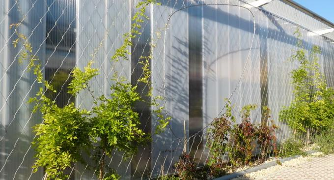 Flexible Inox Wire Rope Plant Trellis , Plant Climbing Green Wall Mesh